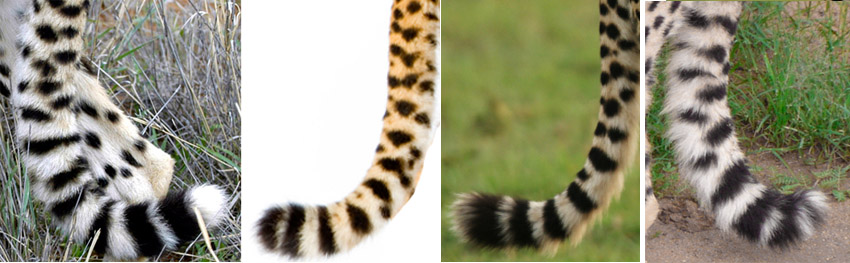 Tail Markings