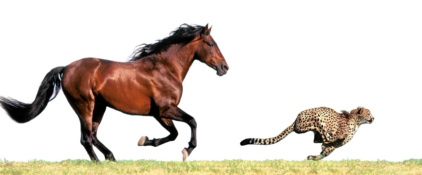 Horse and Cheetah Running