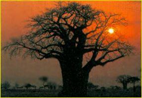 http://www.cheetahspot.com/c/baobab.jpg